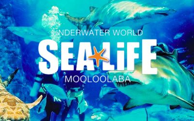 Sealife Underwater World Mooloolaba
