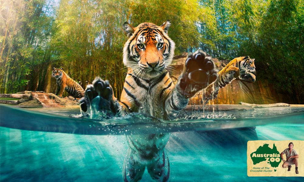 The Australia Zoo