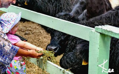 Farm Animal Feeding & Citrus Orchard At Rosecliffe Boutique Farm Cottages