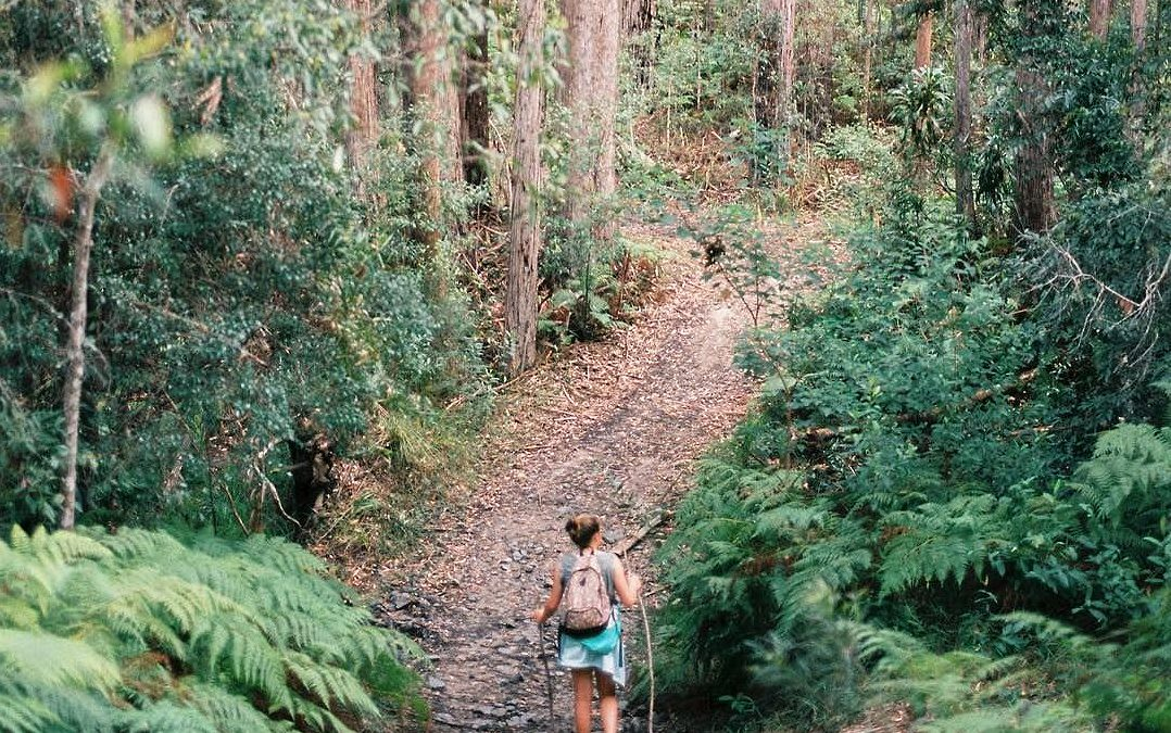Hike or Mountain Bike on the Noosa Trail Network